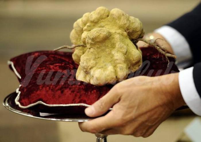 На фото Сколько стоят самые дорогие в мире грибы?