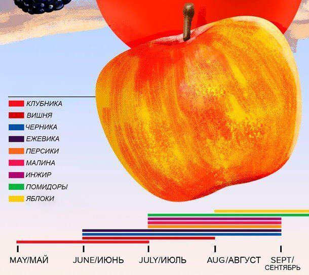 На фото Когда можно есть фрукты без вреда для здоровья