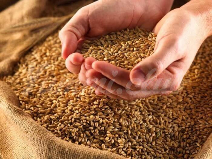 На фото Каша из необработанных зерен снижает уровень сахара в крови