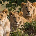 Истории о том, как дикие животные спасали людей