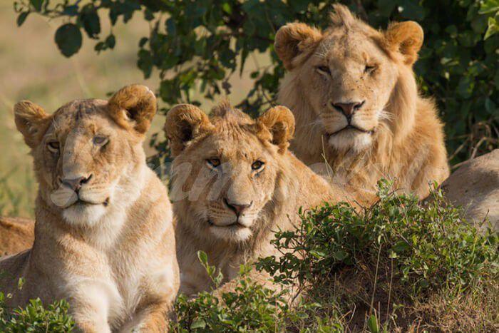 На фото Истории о том, как дикие животные спасали людей