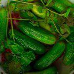 Рецепт Домашние малосольные огурцы с красной смородиной на зиму