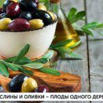 В чем различие: Маслины и оливки