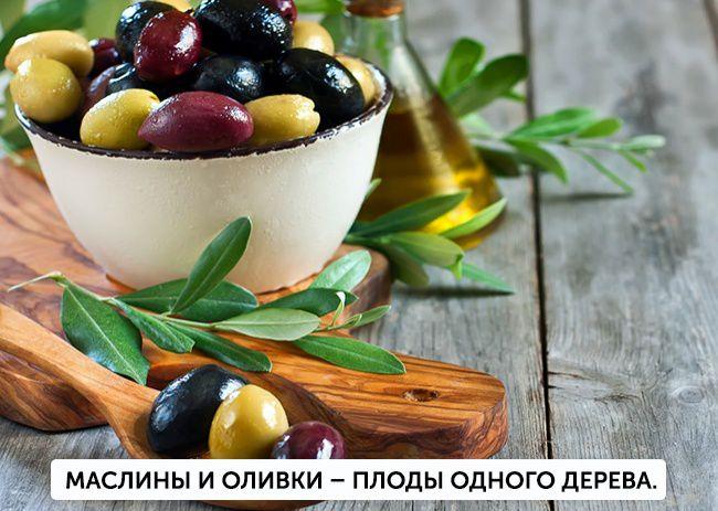 На фото В чем различие: Маслины и оливки