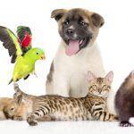 Всемирный день домашних животных