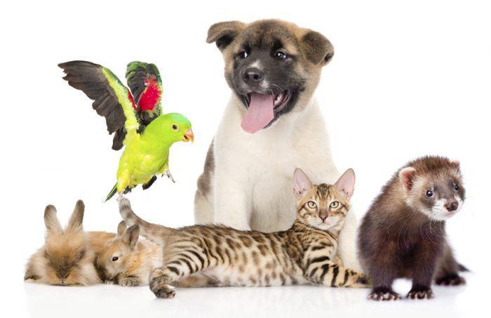 На фото Всемирный день домашних животных