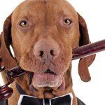 Международный день акций за принятие Декларации прав животных (Международный день прав животных)