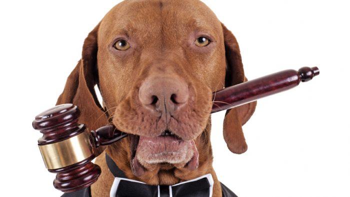 На фото Международный день акций за принятие Декларации прав животных (Международный день прав животных)